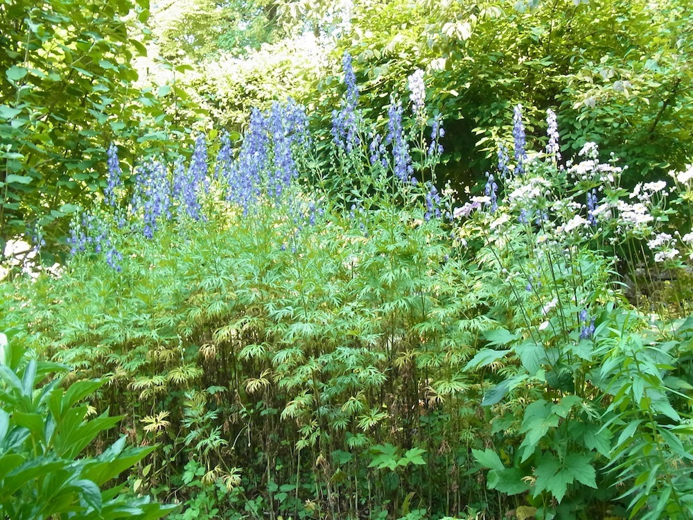 Rittersporn-Garten-Burg-Guttenberg_kreativfreak