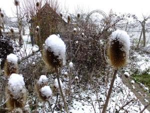 Schnee auf Karde - 15. Januar 2016 - Teilort von Löwenstein, BW - kreativfreak