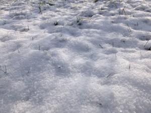 Frisch gefallener Schnee - 20. Januar 2016 - Löwenstein, BW - kreativfreak