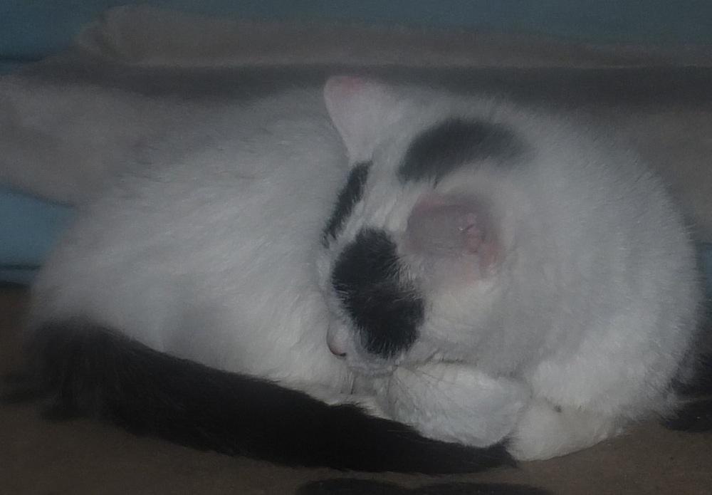 Schlafende Katze - Lucky schläft - 6. Februar 2016 - kreativfreak